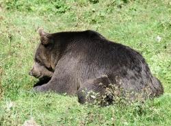 Medvěd (Bavorský les)