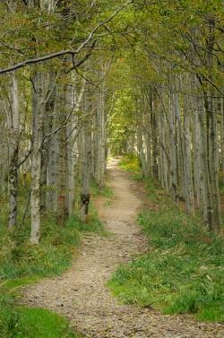 cestou z Lysé hory