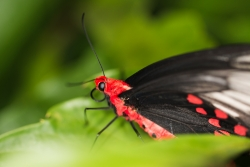 motýl