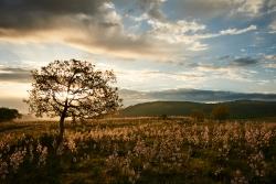 Krajina Gargána