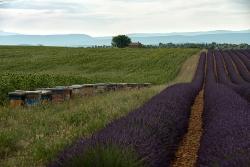 Krajina Provence