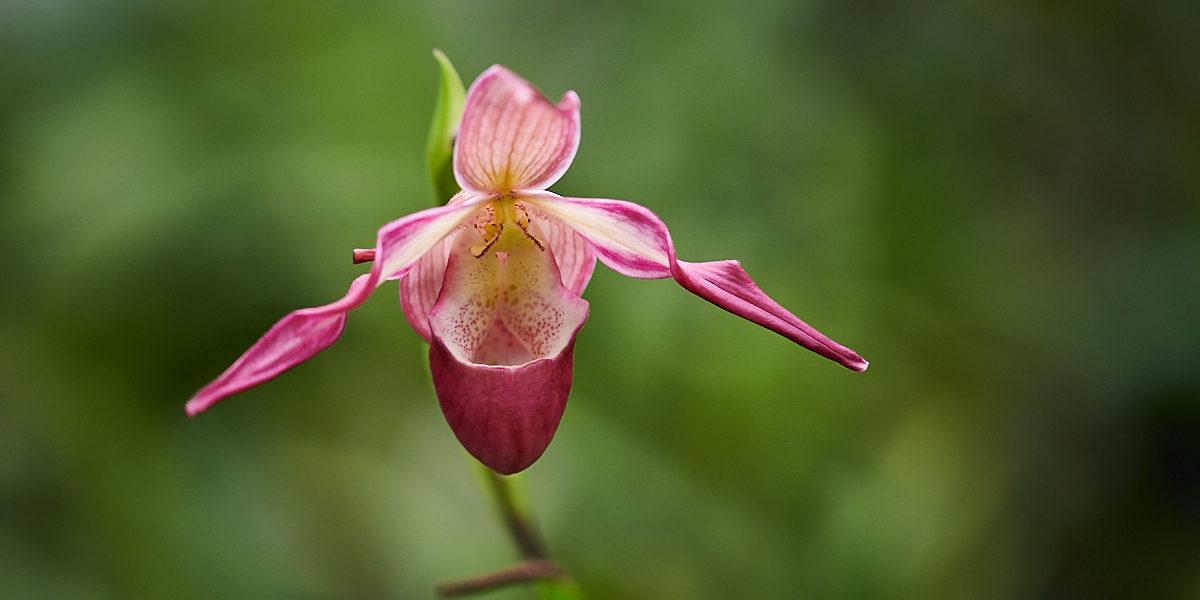Orchideje v Brněnské Botanické zahradě (2019-02)