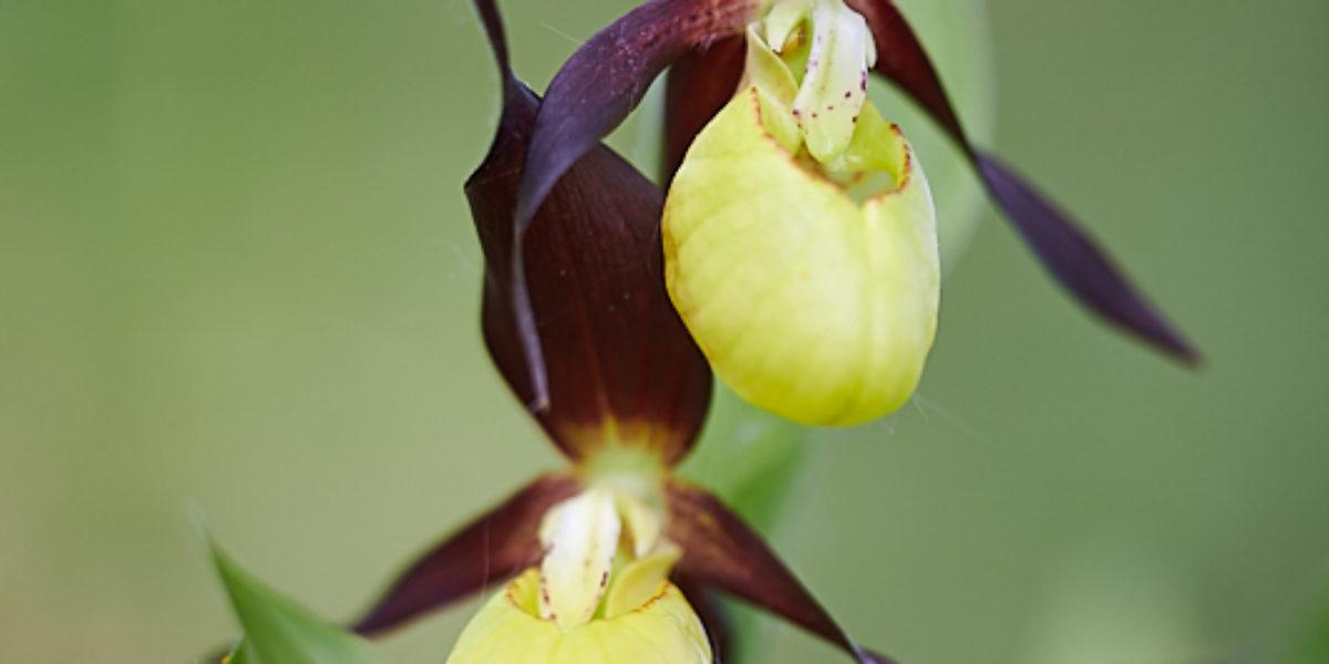 Orchideje (2019-05-01)