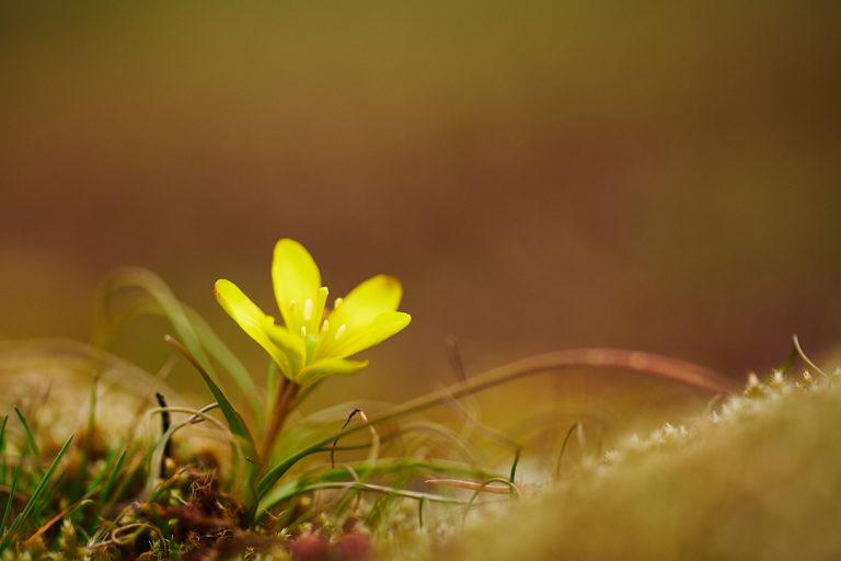 Jarní kvítí (2020-03-09)