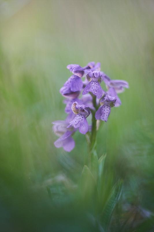 Orchideje (2020-05-03)