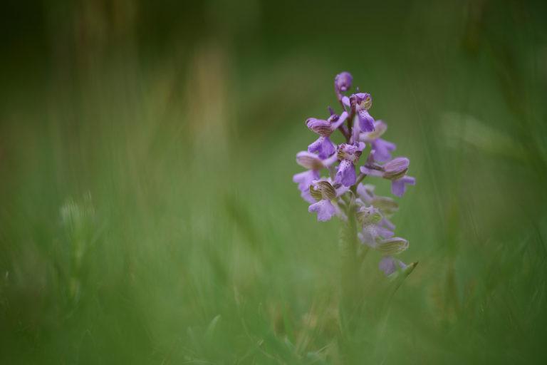 Orchideje (2021-05-01)