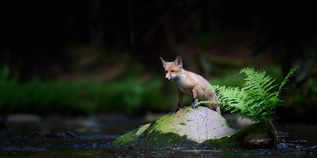 Liška a sovy na Vysočině