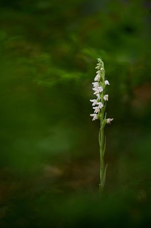 Orchideje (2021-07-18)