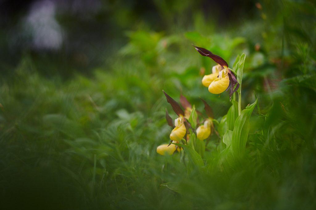 Orchideje (2018-05-12)