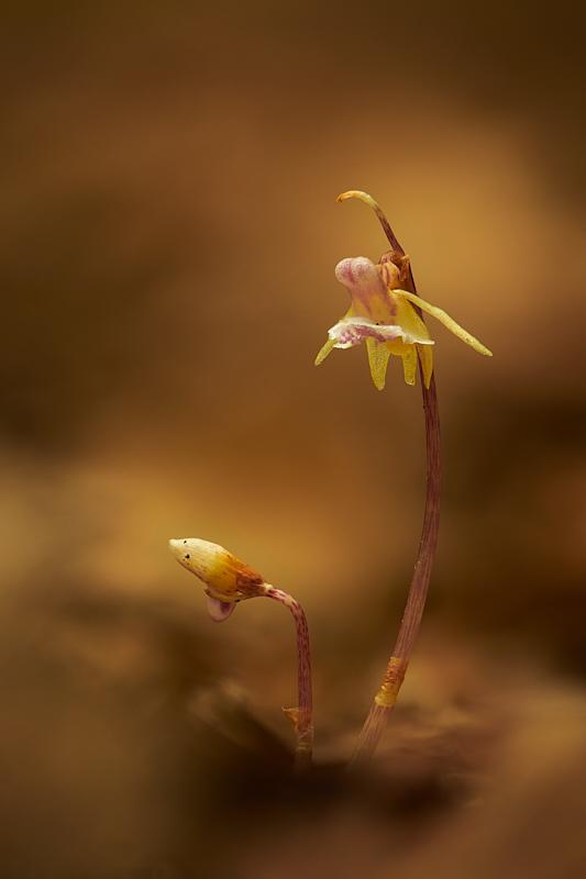 Orchideje (2018-06-23)