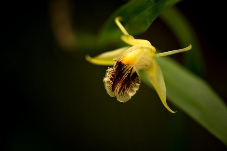 Orchideje v Brněnské Botanické zahradě (2015_11)