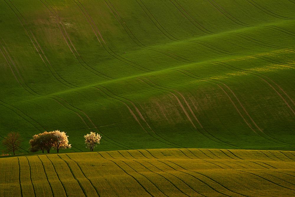 Jarní pole Jižní Moravy