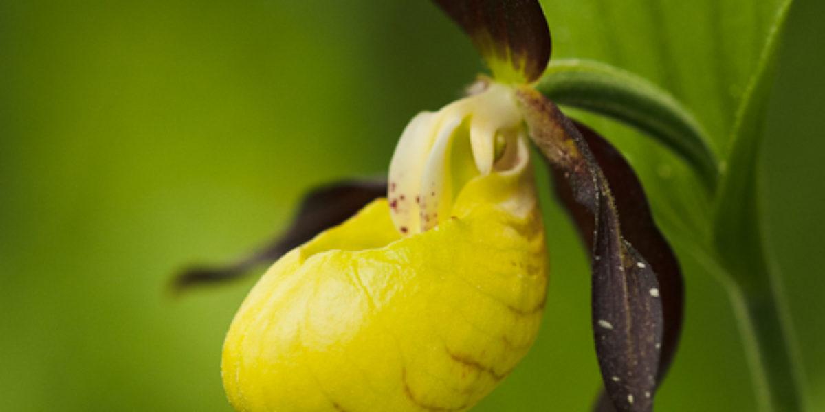 Orchideje (2011_05_08)