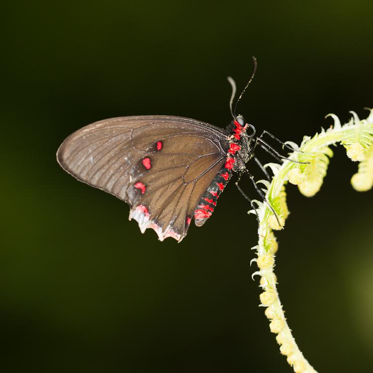 Motýli ve Fata Morgana